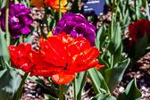 2015-05-18_0368.jpg