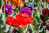 2015-05-18_0369.jpg